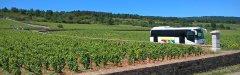Voyages_autocars_Morey-Wine_tour_in_the_fabulous_Montrachet.jpg