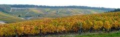 Voyages_autocars_Morey-Vignoble_de_Champagne-Cote_des_Bar.jpg